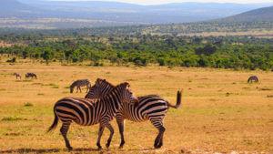 Sports tours to Kenya