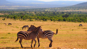 Sports tours to Kenya
